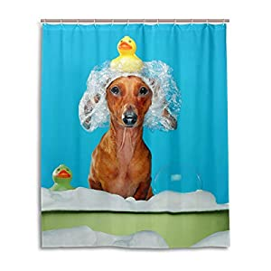 Chen Miranda Waterproof Shower Curtain for Everday Use Dachshund Dog Having Bath Bathroom Set Polyester Fabric Shower Curtain with Hooks 60x72 inch