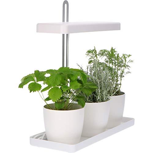 Proventa | Design Mini-Gewächshaus mit höhenverstellbarem LED-Pflanzlicht | Innengarten | Pflanzenlicht | Kräutergarten | Kräuter selbst züchten | Gekaufte Kräutertöpfe länger frisch halten | 20 Watt