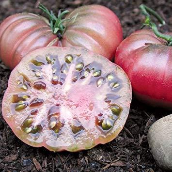 FERRY Keim Seeds: 1 Gramm Bio-Saatgut von Purple Calabash Tomato Bio