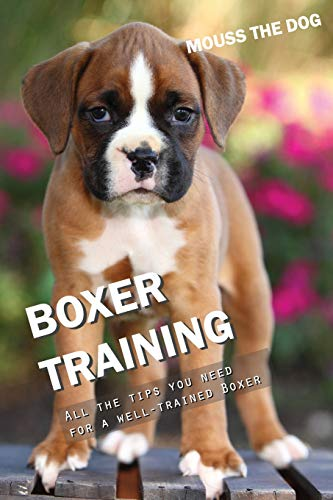 BOXER TRAINING: All the tips you need for a well-trained Boxer