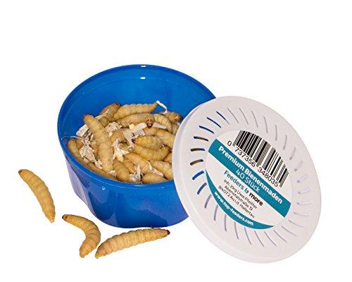 Feeders & more 3 Dosen zu je 40 Bienenmaden, Wachsmaden Angelköder Futtertiere **MEGADEAL** lebend & frisch Premium Qualität