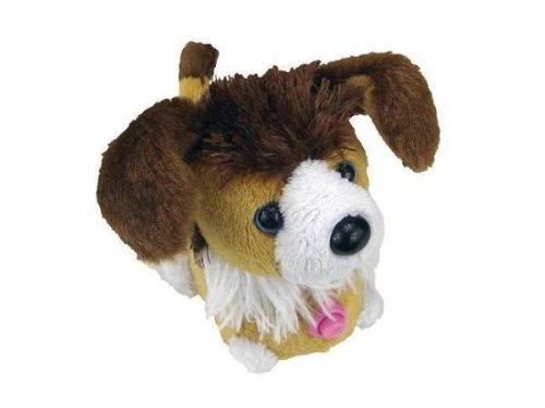ZZ Puppies -Puppies (Asst 2)