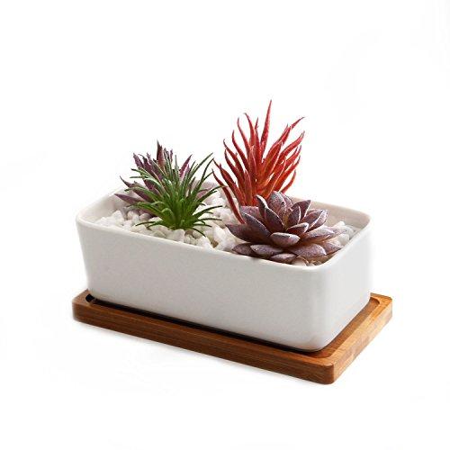 T4U 16.5CM 陶器鉢 植木鉢 多肉植物鉢 サボテン鉢 竹トレイ付き 底穴付き 白 長方形