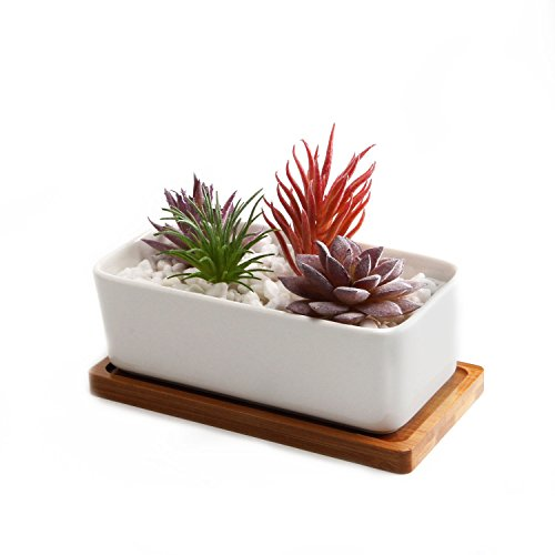 T4U 16.5CM 陶器鉢 白 矩形 植木鉢 多肉植物 サボテン鉢 竹トレイ付き