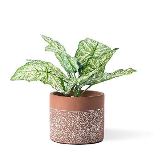 DOMDO Cement Planter Pot 5.5 Inches Vintage Indoor Plants Indoor Home Decor Flowerpot Containers Unglazed Medium Bonsai Concrete with Drain Hole, Dot Pattern Embossment - Terracotta