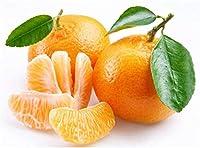 SOOGGI 25粒 甘いオレンジの種 シード 植物種子 ホームガーデン ファーム植栽 園芸 高い発芽率 簡単な栽培 家庭用