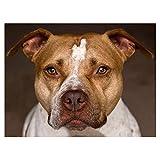 luckykyky 5D Diamond Painting Kits Kreuzstich Pit Bull Terrier Hund Fotos von Strass Diamant Stickerei Bohrer Mosaic Round Diamond 16X20Inch / 40X50Cm