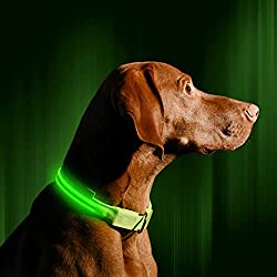 Dog wearing a green LED dog collar by Illumiseen.