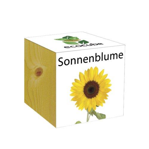 ecocube Holzwürfel - Sonnenblume