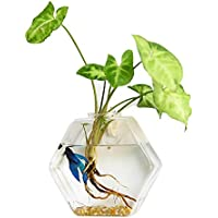 Exquisita Hermosa Calidad Precio Sala de estar Florero de jardín Vidrio de silicio de alto boro Florero de vidrio de pared creativo Colgante de pared Tanque de peces Colgante Florero hidropónico