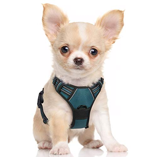 rabbitgoo Dog Harness, No Pull Harness for Small Dogs, Adjustable Dog Vest Harness with Front & Back Leash Clips, Reflective Pet Harness Soft Padded with Easy Control Handle (Teal, Small)