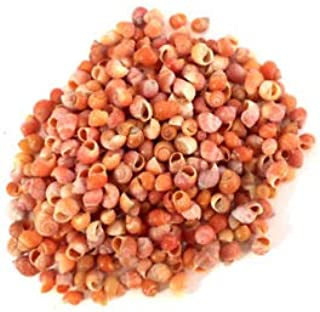 KARPP 1oz (About 400+) Tiny Little Red Mongo Snail Shells Micro Seashells 1/8