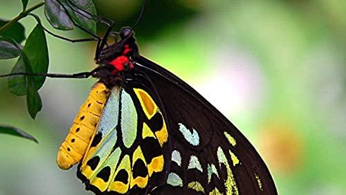Rompecabezas de 1000 piezas para adultos Rompecabezas de papel Rompecabezas de mariposa hermosa Rompecabezas de bricolaje educativo Juego de rompecabezas educativo para niños Juegos familiares regalo