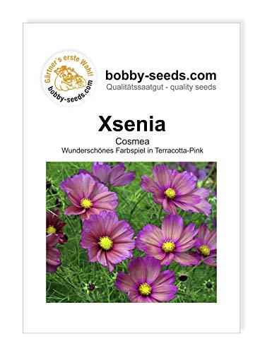Cosmee Xsenia Blumensamen von Bobby-Seeds Portion