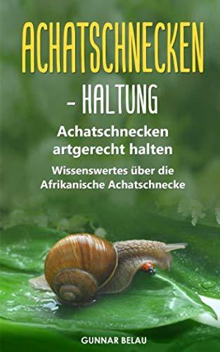 Achatschnecken - Haltung: Achatschnecken artgerecht halten   Wissenswertes über die Afrikanische Achatschnecke