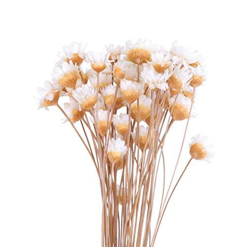 IMIKEYA Getrocknet Blumen Kunstblumen Natürliche Trockenblumen Gypsophila Getrocknet für Hochzeit Hause Party Fotografie Hotel Vase Deko 40cm 50 Stücke