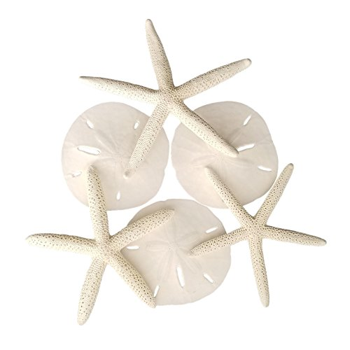 Tumbler Home Set of 6 White Starfish and Sand Dollars - 3 Finger Starfish 4 to 6 inch and 3 Sand Dollars 3 to 3.5 inch - Starfish and Sand Dollars for Crafts