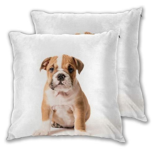 FOURFOOL 2er Set Kissenbezüge,Netter Welpe der englischen Bulldogge lokalisiert auf weißem Hintergrund,Weicher Kissen Fall Kissenbezug Dekokissen Kissenhülle...