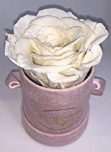 Somewhere Blooms Eternity Rose, Suede Gift Box, Preserved Fresh Flower, Long Lasting, Perfect Luxury Gift for Mother's Day, Birthday, Anniversary (White, Pink Box)