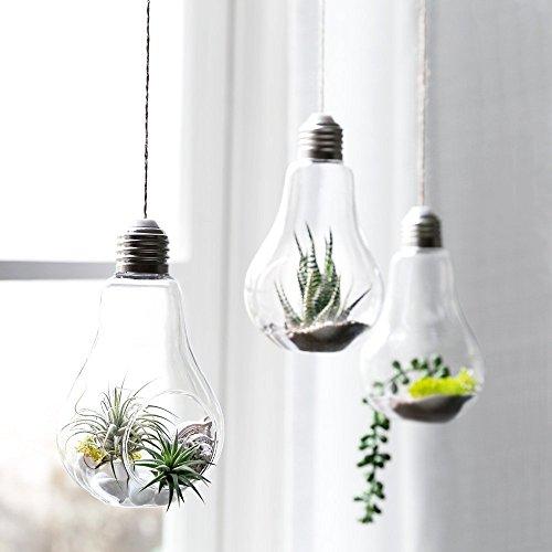 sotoboo 3 Pack Creative zum Aufhängen Leuchtmittel Glas Terrarium Vase Glas Display Pflanzgefäß Blumentopf Box für Kaktus Pflanze Farn Moos des frischen Air Halterung - Garten Balkon Cafe Dekoration