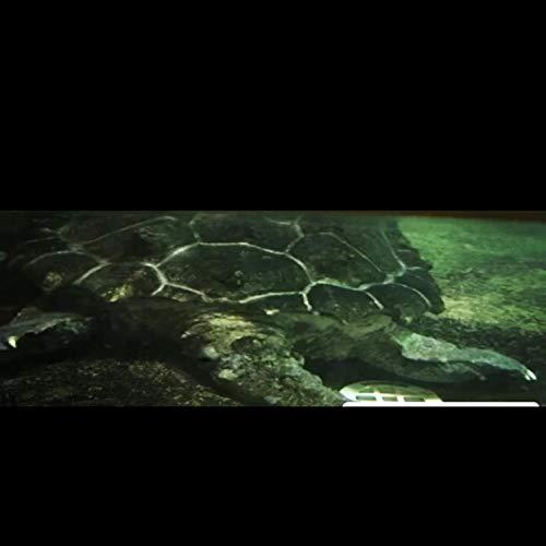 Aqua Marine