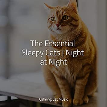 The Essential Sleepy Cats | Night at Night