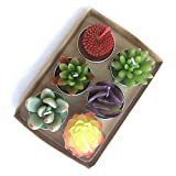 WANGMINGTU Succulent Cactus Tea Light Candles Unscented 6pcs Assorted for Birthday Party Favors Wedding Decor Gift Sets