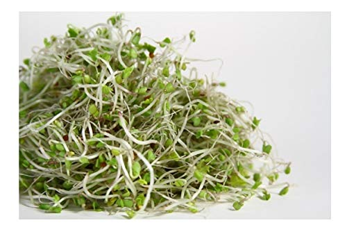 Organic Sprouting Seeds - Broccoli - 40GM
