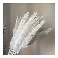 葦の束の花の花束 15個の自然の乾燥花小さなパンパス草のPhragmity人工植物の結婚式の束の家の装飾の皮 ドライフラワーアレンジメント (Color : D)