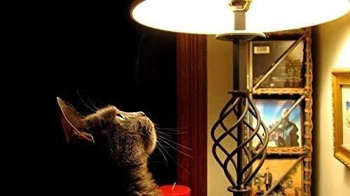 Puzzels for volwassenen 1000 stuks zijt, kat naar de Lamp, Home Decoration,Het ontwikkelen van een gezonde geest, Puzzle Games