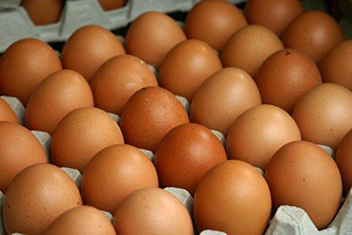 Fresh Chicken Eggs   Amazon