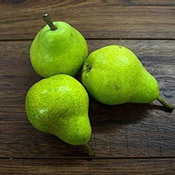 Potseed Keimfutter: 40 Seeds: USA Erbstück Organic Williams Birnen Baum 10-80 Samen