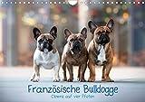Französische Bulldogge - Clowns auf vier Pfoten (Wandkalender 2021 DIN A4 quer)