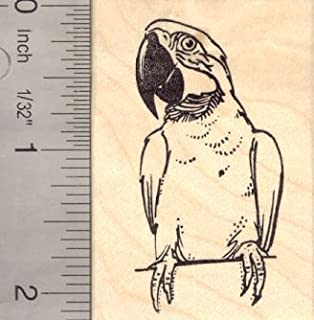 Macaw Parrot Rubber Stamp Bird Perched