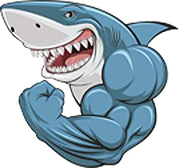 Amazon Com Buff Muscular Scary Smiling Great White Shark Cartoon Vinyl Decal Sticker 12 Wide Arts Crafts Sewing
