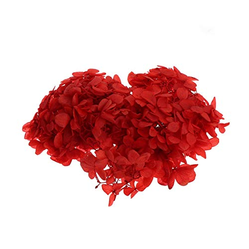 CQHUI 10g/bag Natural Fresh Preserved Flowers Dried Hydrangea Flower Head For DIY Real Eternal Life Flowers Material (Color : Red)
