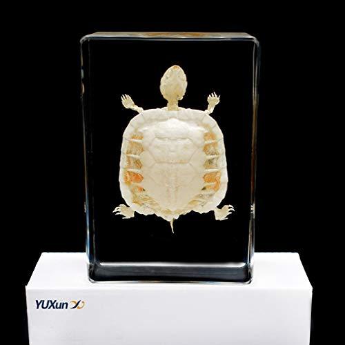 Cherish XT Marine Animal Turtle Skeleton Specimen Resin Paperweight Animal Bone Model Taxidermy Science Classroom Specimen for Science Education