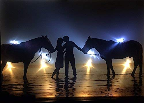 Samarkand-Lights LED-Bild mit Beleuchtung LED- Bilder Leinwandbild 65 x 45 cm Leuchtbild Liebe Kuss Pferde Wandbild