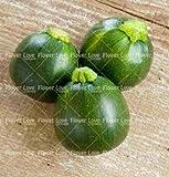 100 Pcs semi di zucca zucchine Organic Heirloom semi di verdure ad alto rendimento semi per il giardino domestico Seeds Ing: 2