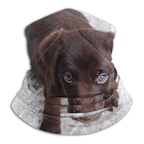 XXWKer Microfibre Chapeaux Tube Masque Visage Tour de Cou Cagoule, Pet Dog Beach Sand Ocean Sea Neck Gaiter Warmer Windproof Face Dust for Men Women