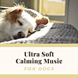 Relaxing Dog Beds Music for Stressed Dogs