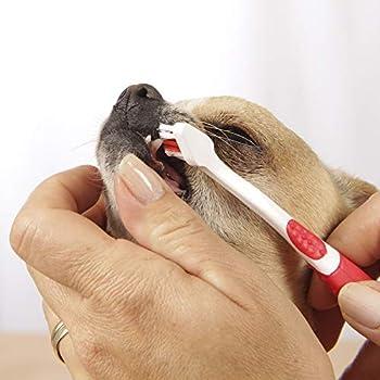 BEAPHAR - COMBI-PACK : Brosse à dents + Dentifrice haleine fraîche pour chien et chat (tube de 100 g) – Élimine la plaque dentaire – Empêche la formation de tartre – Combat la mauvaise haleine
