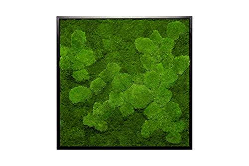 Moosbild Wandbild mit Moos Kugelmoos Moosplatte Pflanzenbilder Moosbilder versch. Maße günstig (85x85 cm, schwarz)