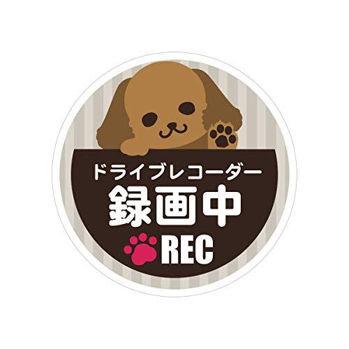 Biijo ドライブレコーダーシール 防水・耐熱 ステッカー シール 犬 DOG サイズ直径約135mm丸 ドライブレコーダーステッカーあおり運転対策(トイプードル・茶色(直径135mm))