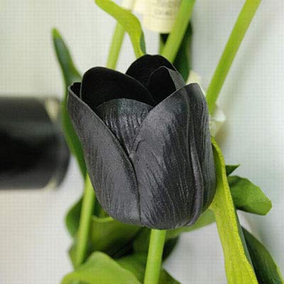 Nouveaux 10 pcs Tulipe Graines (non Tulipe ampoules), 19 Couleurs Disponibles Tulipes variété Fresh bulbe Racine Fleur Accessoires Planté noir