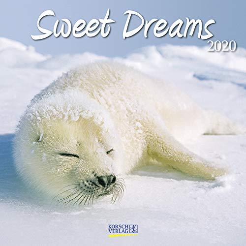 Sweet Dreams 2020: Broschürenkalender mit Ferienterminen. Süß schlafende Tiere. 30 x 30 cm