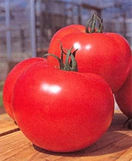 momotaro tomato plants