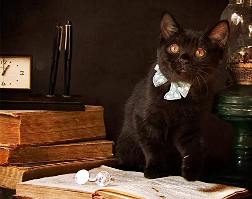 Pintura de bricolaje por número gato negro pintado a mano moderno arte de pared pintura por números kits de animales regalos únicos hechos a mano A5 40x60cm