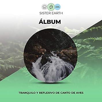 Álbum Tranquilo y Reflexivo de Canto de Aves