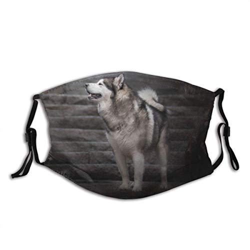 Alaska Malamute Dog Snow Style Art Colorful Reusable Face Mask Scarf Replaceable Filter Dust Mask.